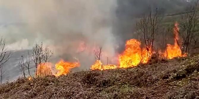 Arazisindeki Otları Yakmak İsterken Yangın Çıkardı
