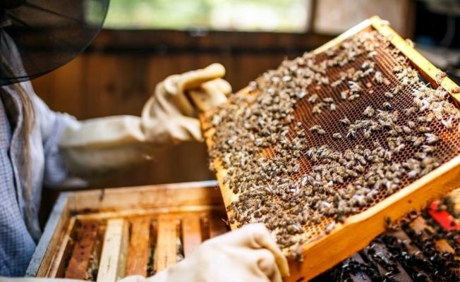 Arı yetiştiricilerine alternatif ürün çağrısı