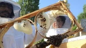 Arıcılar desteklemeden memnun değil