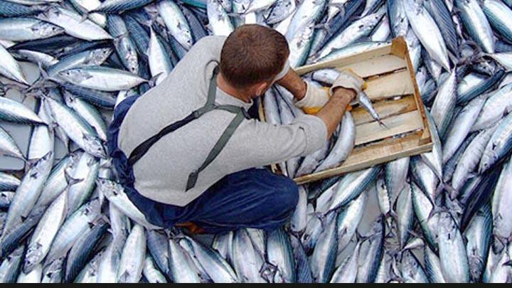 Av yasağı, balık fiyatlarını etkiledi
