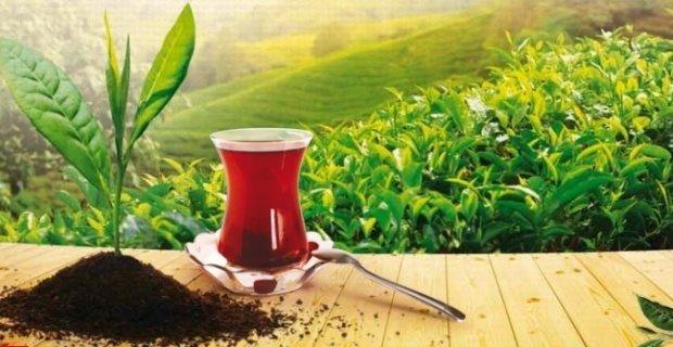 Çay ihracatı kazandırıyor