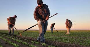 Çiftçilere müjde paketi