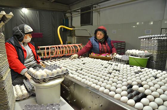 Çorum'dan haftada 2 milyon yumurta ihracatı