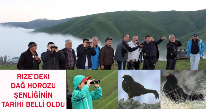 Dağ Horozu Şenliği Tarihi Belli Oldu