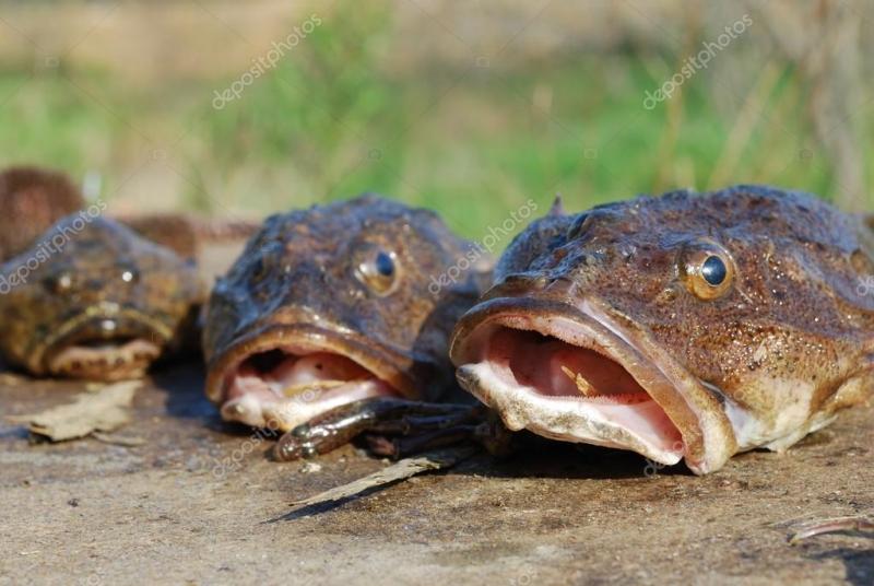 Denizi olmayan kent yıllık 4,7 bin ton balık üretiyor