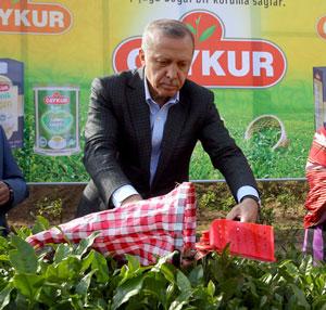 Cumhurbaşkanı Erdoğan Çay Üreticilerinin Memleketlerine Dönüş Yapıp Yapamayacaklarına İlişkin Kararı Açıkladı