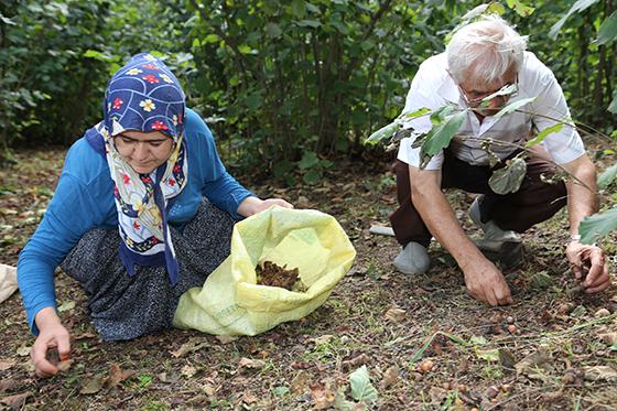 Fındık üreticisi sel sonrası yeniden bahçelerde