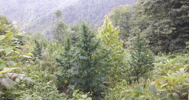 Giresun'da ağaçtan düşen kişi hayatını kaybetti