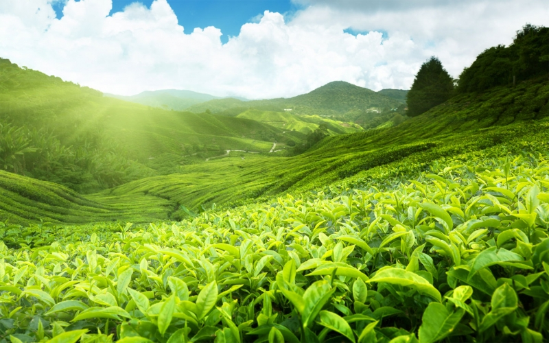 Türk fındığı ve çayı Paris'te tanıtıldı