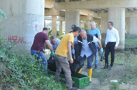 Samsun'da nehir kenarında erkek cesedi bulundu