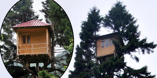 Rizeli ağacın tepesine ev yaptı
