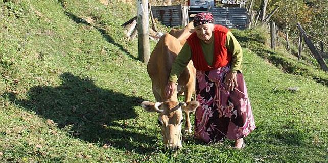 Rizeli Havva Nine, 16 yaşındaki ineği ile yaşıyor