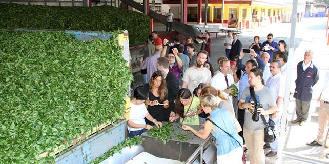 Dünya Çay Uzmanları Rize'de