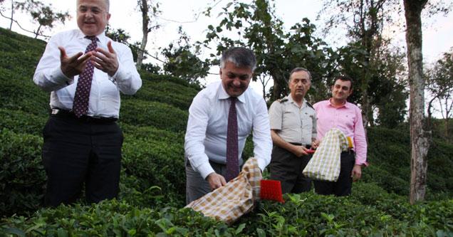 Rize protokolü çaylığa girerek çay topladı