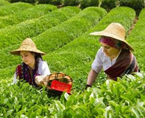 ÇAYKUR'dan Kurban Bayramı Çay Alımları Kararı