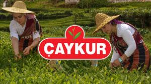 ÇAYKUR'dan Üreticiye Uyarı: Acele Ederek Düşük Fiyattan Çay Almaya Çalışan Fırsatçıların Oyununa Düşmeyin