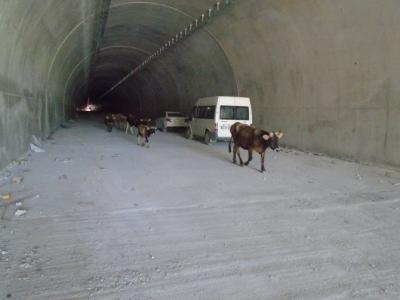 Çığ Tünelleri Kullanıma Açıldı