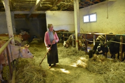 Doğu Karadeniz'de Orman Köylüsüne 10,2 Milyon Liralık Destek