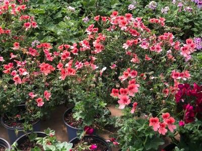 Hüseyin Dilsiz Rize'de Sera Kurdu Birçok Çiçek Yetiştiriyor Girişimcilikte Çığır Açıyor