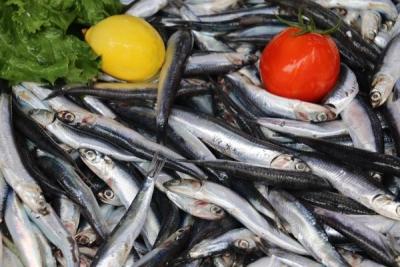 Karadeniz'de sıcaklık balıkçıları etkiledi
