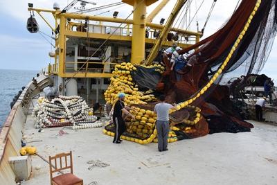 Karadenizli balıkçıların umudu orkinos avcılığında