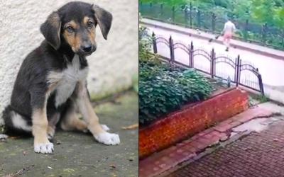 Köpek yavrusunu dereye atan kişiye idari para cezası