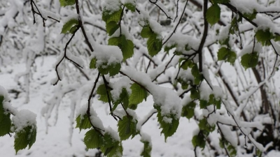 Meteorolojiden 5 ilde zirai don ve buzlanma uyarısı
