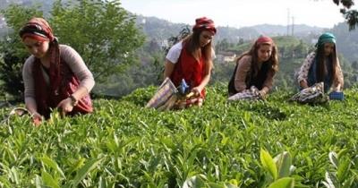 Mevsimlik İşçiler Çalışma İzni Yönetmeliği