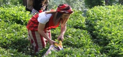 Organik Çayda Fark Ücreti ve Taban Fiyatı Belli Oldu