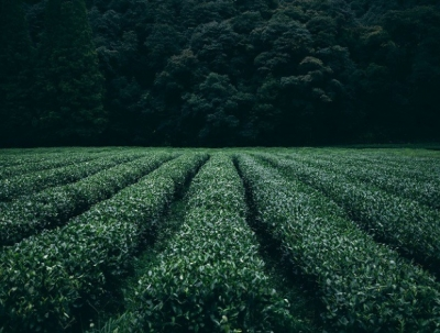Toros Tarım organik tarım üretimine giriyor