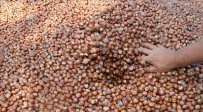 Türkiye'den 11 ayda yaklaşık 262 bin ton fındık ihraç edildi
