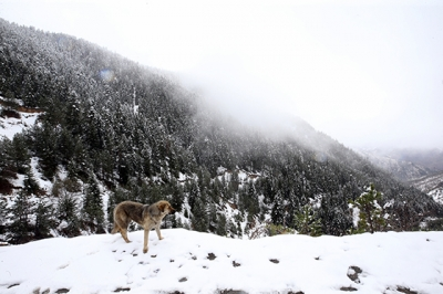 Zigana Dağına Kar Yağdı